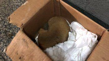 Salvaron a un perrito que habían tirado en la basura