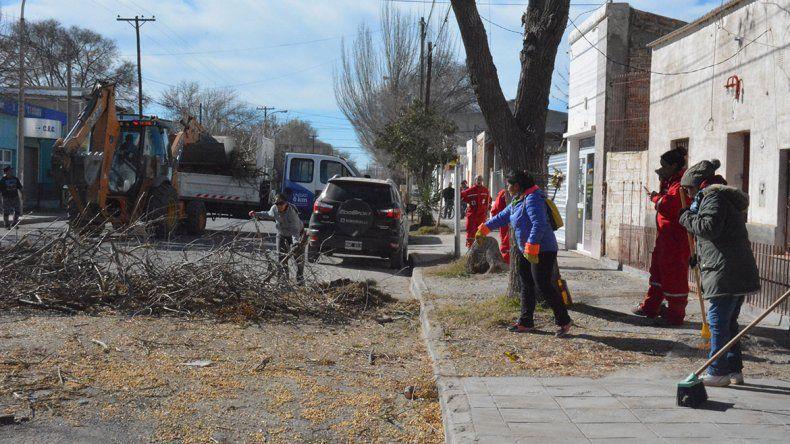 Mejoran veredas y sacan árboles viejos en Plottier
