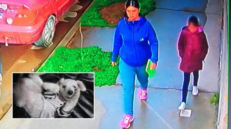 Una mujer robó una perrita de la puerta de una casa y quedó escrachada