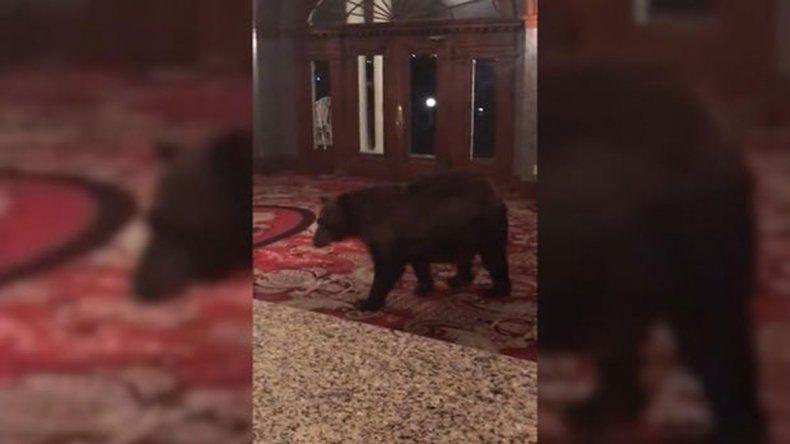 Un oso se pasea por el hotel de El Resplandor