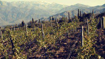descubren nuevos rincones para vinos de altura