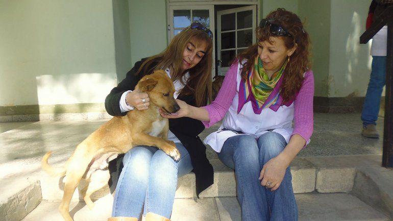 Adrián Suar, el perro al que le gusta ir al colegio