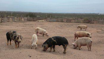 nueva esperanza: se les mueren los animales a los crianceros