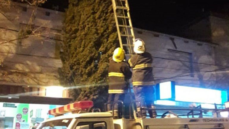 Bomberos trabajaron durante una hora para rescatar un gatito