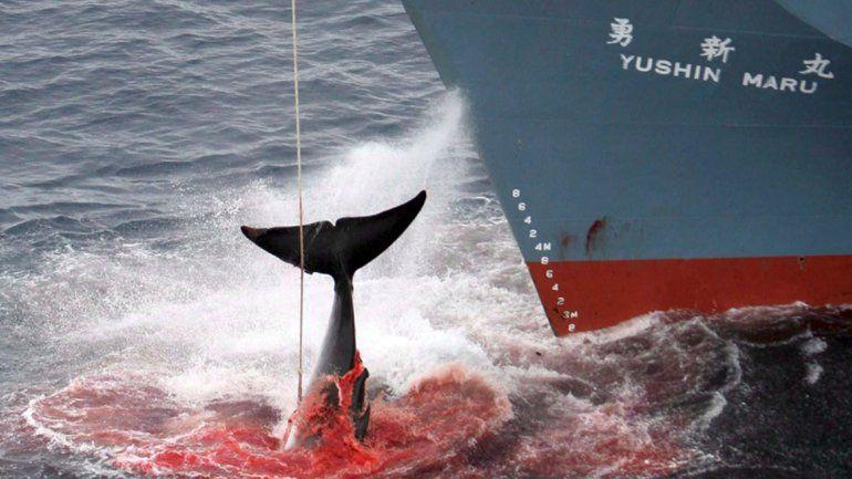 Japón amenaza con volver a la caza de ballenas