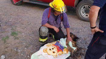 bomberos rescataron a un perro con hipotermia de un desagüe