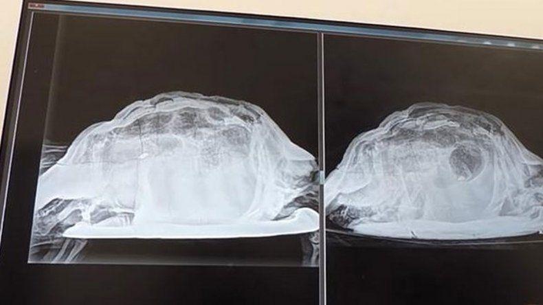 Salió y se despertó con una tortuga en la vagina