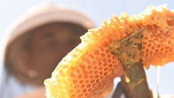 crece el atractivo de producir miel en forma casera
