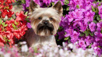 Llegó la primavera y aparecen las alergias: comportamiento y alertas