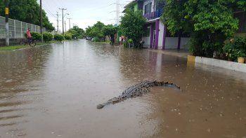 El municipio de Peribán de Ramos es uno de los más afectados.