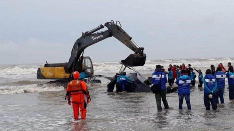 Intenso trabajo para rescatar una ballena encallada en Mar del Tuyú