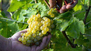 un reporte compara las ultimas cosechas y arroja curiosos resultados