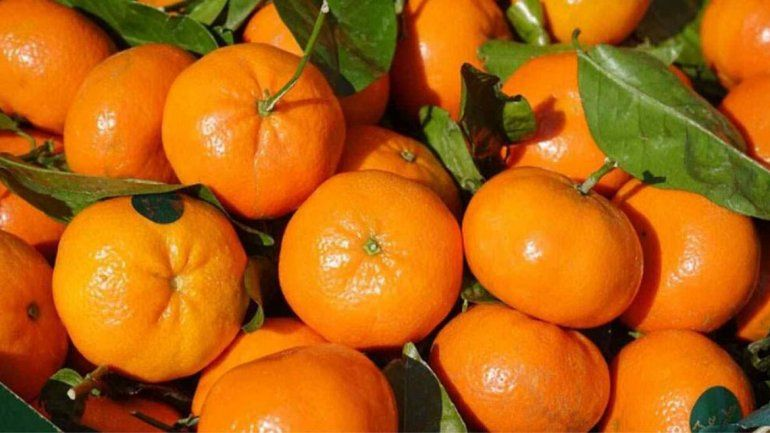 La mandarina les da pelea a enfermedades infecciosas y duras