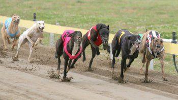 diez detenidos por realizar una carrera de perros