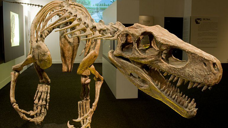 El Museo de Historia Natural de Nueva York apoyó este gran proyecto.
