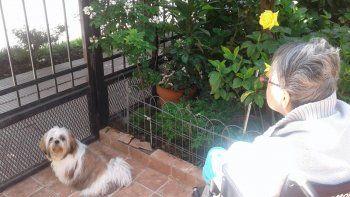 buscan a coco, el perrito que sirve como terapia para una abuela