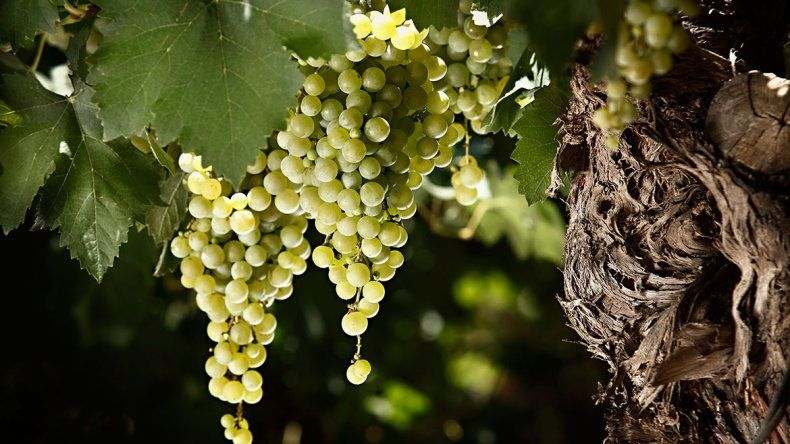 Largan la ruta de La Rioja y la semana del torrontés de altura