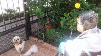 hallaron a coco, el perro de la abuela con alzheimer