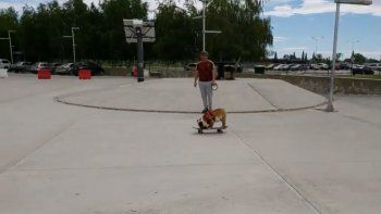 el perro skater neuquino que es furor en las redes