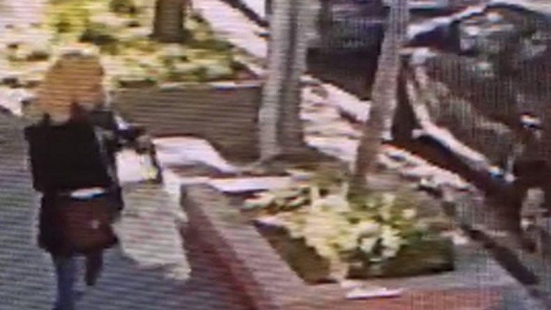Indignante: pasó caminando, le gustó la planta de una casa y se la robó con total impunidad