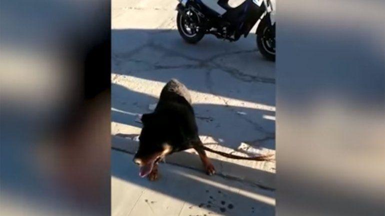 Indignante: arrastró a su perro en una moto y lo frenaron los vecinos
