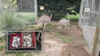 la policia libero animales en cautiverio de un mini zoo clandestino cerca del aeropuerto