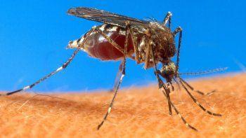 cada vez mas cerca de ser un pais libre de malaria