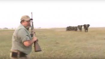 manada de elefantes busca vengar la muerte de su lider