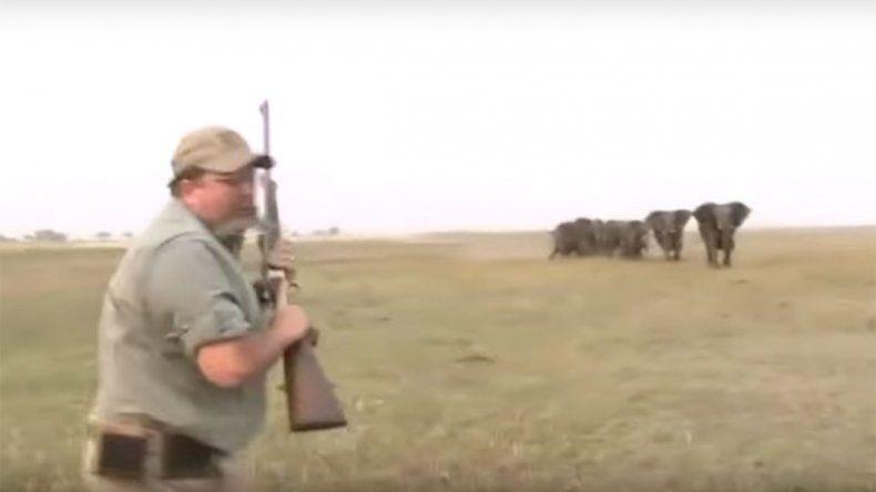 Manada de elefantes busca venganza de los cazadores de su líder