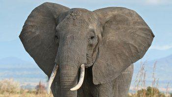 la inteligencia artificial defendera a los elefantes