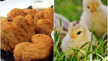 produciran carne de pollo mediante celulas extraidas