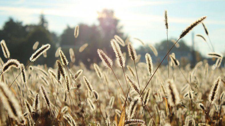Sale el sol y llegan las alergias: qué hacer y cómo prevenirlas