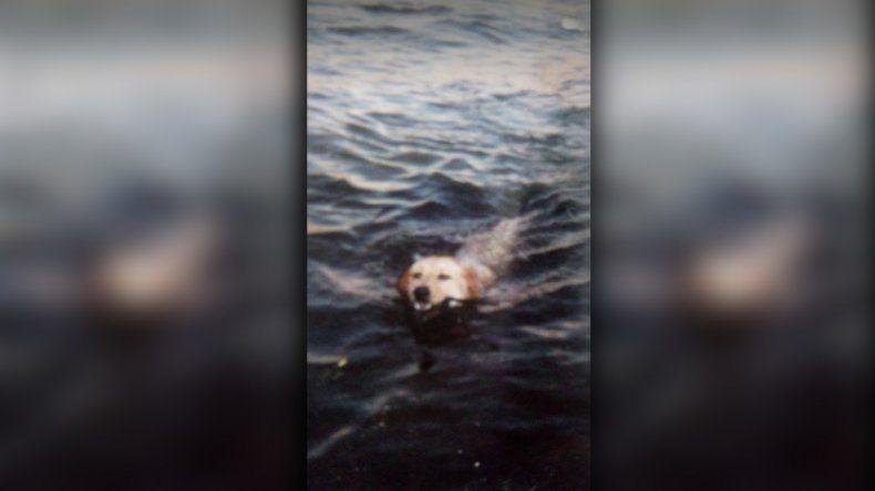 Tras 21 días de búsqueda, encontraron muerta a la perra Anís cerca de la confluencia de los ríos