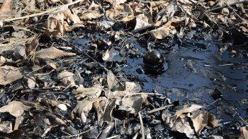 un perro murio al caer a un pozo de brea asfaltica