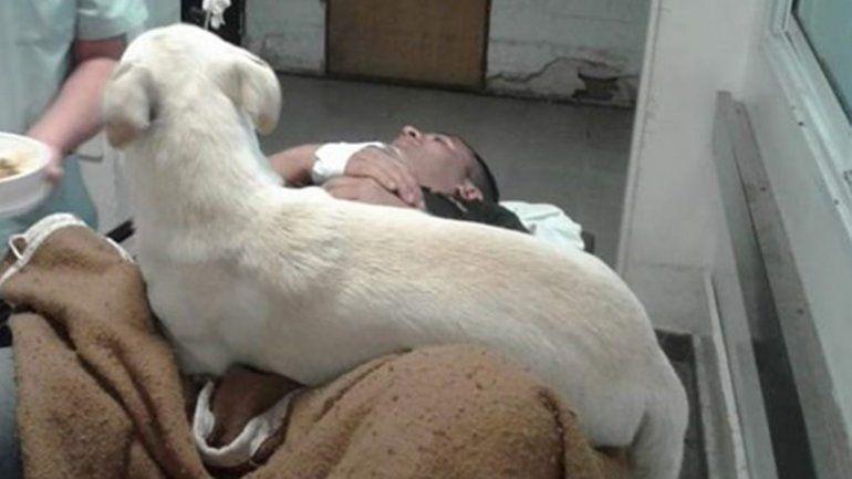 Conocé al perro que persiguió a una ambulancia por 3 km para acompañar a su amo