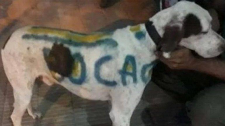 Indignante: pintó a su perro con los colores de Boca y lo escracharon