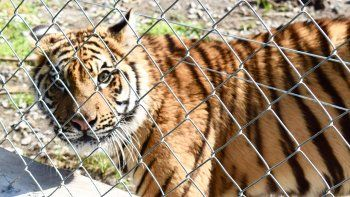 al estilo narco: desbaratan un zoo de un empresario