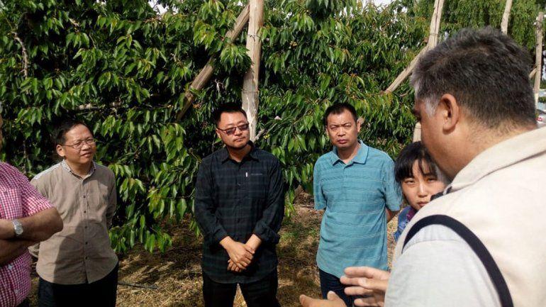 Se abre la puerta del mercado chino para cerezas patagónicas