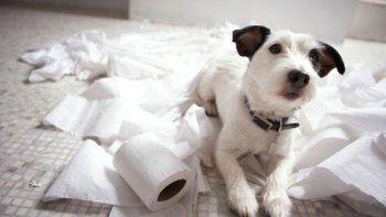 ¿se controla la diarrea?