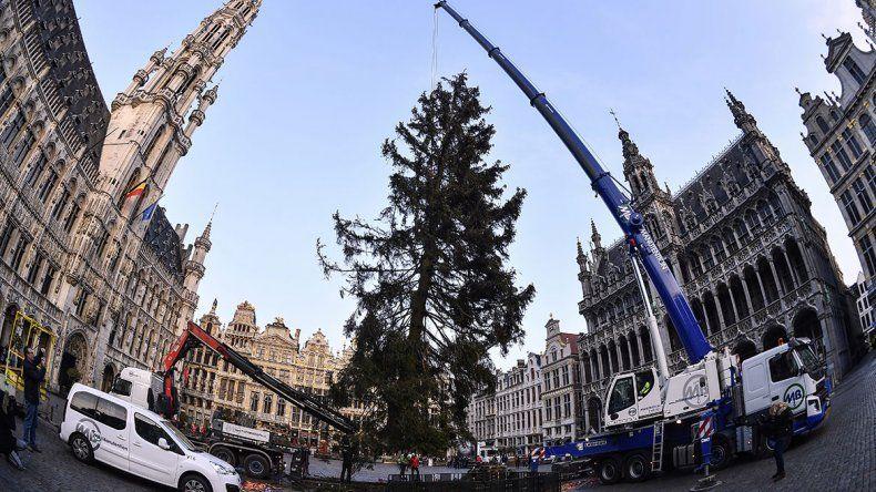 El Papa ya tiene su árbol de Navidad en la plaza San Pedro