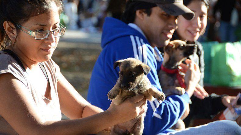 Las redes sociales, aliadas de mascotas en adopción