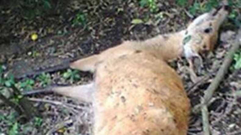 Una jauría mató a 22 ciervos en el zoológico cordobés