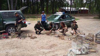 rescataron 53 aves en cautiverio que eran comercializadas