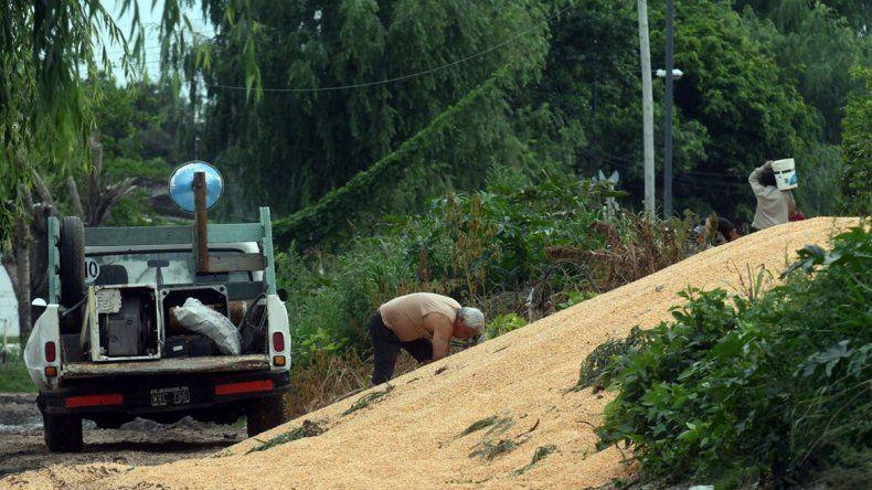 Detuvieron un tren de carga para robar el maíz que llevaba