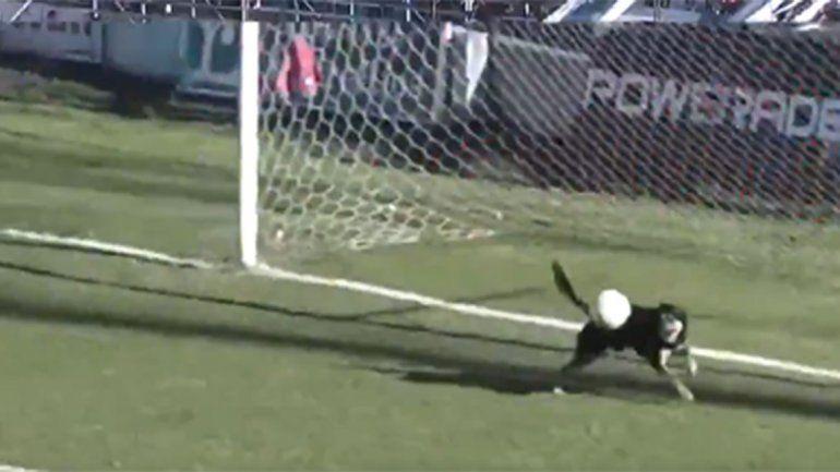 Insólito: parecía gol pero apareció un perro y la sacó de la línea