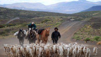 provincia gestiona la exportacion de chivos a china