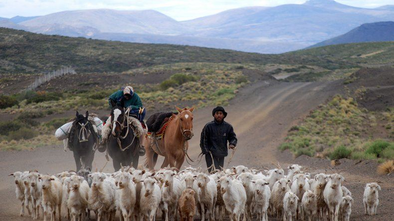 Provincia gestiona la exportación de chivos a China