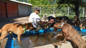 crecen las guarderias vip para mascotas