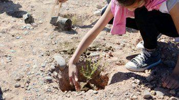 plantaron 290 especies nativas en la barda de parque norte