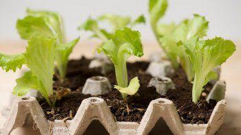 cultivar en casa hace que se ahorre mucho